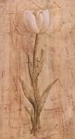 White Tulip Fine-Art Print