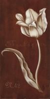 White Tulipa N 42 Fine-Art Print