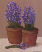 Purple Flowers In Pots Fine-Art Print