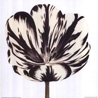 Black White Flower Fine-Art Print