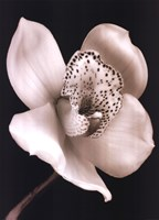 White Black Speckled Flower Fine-Art Print