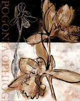 Blooming Orchid II Fine-Art Print