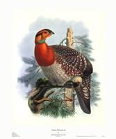 Native Pheasant II Framed Print