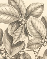 Tropical Connection I Fine-Art Print