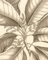 Tropical Connection II Fine-Art Print