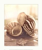 Seashore Achatina Fine-Art Print