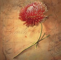 Little Strawflower Fine-Art Print