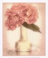 Lovely Hydrangea Fine-Art Print