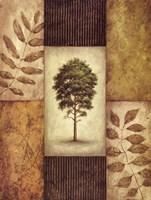 North American Pine Fine-Art Print