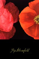Dual Poppy Left Fine-Art Print