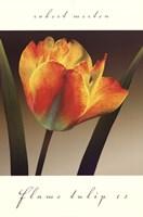 Flame Tulip II Fine-Art Print
