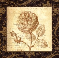 Rose - with a border Fine-Art Print