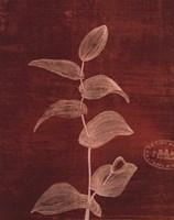 Leaf Study IV Fine-Art Print