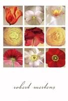 Floral Collection Fine-Art Print