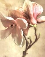 Pink Magnolia I Fine-Art Print