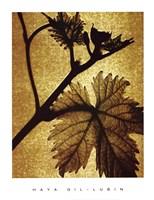 Golden Time II Fine-Art Print