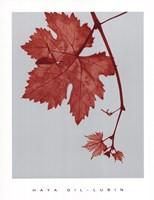 Red Bud Fine-Art Print
