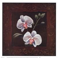 Orchid Study II Fine-Art Print