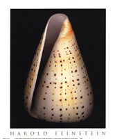 Lesser Butterfly Cone Fine-Art Print
