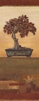 Bonsai IV - Petite Fine-Art Print
