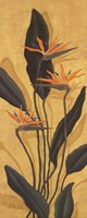 Bird Of Paradise - Mini Fine-Art Print