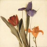 Tre Fiori I - Special Fine-Art Print