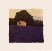 Lavender Country - Mini Fine-Art Print