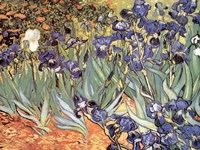 Irises in the Garden, Saint-Remy, c.1889 Fine-Art Print