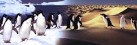Surreal Penguin Landscape Fine-Art Print