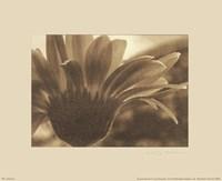 Gerberas I Fine-Art Print