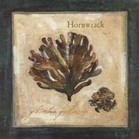 Hornwrack Fine-Art Print