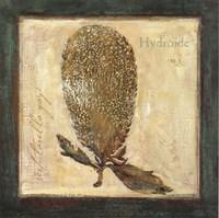 Hydroide Fine-Art Print