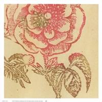 Coral Rose Fine-Art Print