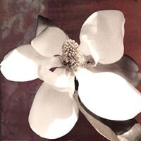 Magnolia Blue I Framed Print