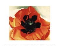 Poppy, 1927 Fine-Art Print