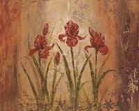 The Iris Style Fine-Art Print