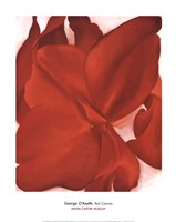Red Cannas Fine-Art Print