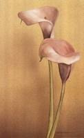 Calla II Fine-Art Print