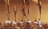Gilden Tulips Fine-Art Print
