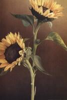 Isabell's Garden I Fine-Art Print
