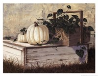 White Pumpkins Fine-Art Print