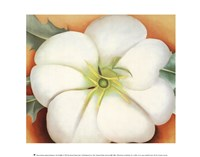 White Flower on Red Earth, No. 1 Fine-Art Print