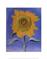 Sunflower, New Mexico, 1935 Fine-Art Print
