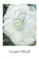 White Camellia Fine-Art Print