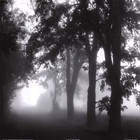 Misty Pathway Fine-Art Print