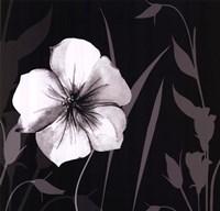 Ebony and Ivory I Fine-Art Print