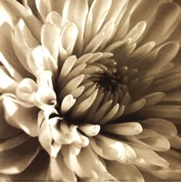 Sepia Bloom I Fine-Art Print