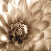 Sepia Bloom III Fine-Art Print