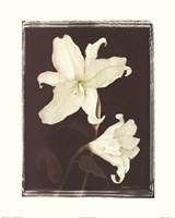 White Lilies in Chocolate Fine-Art Print