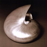 Nautilus I Fine-Art Print
